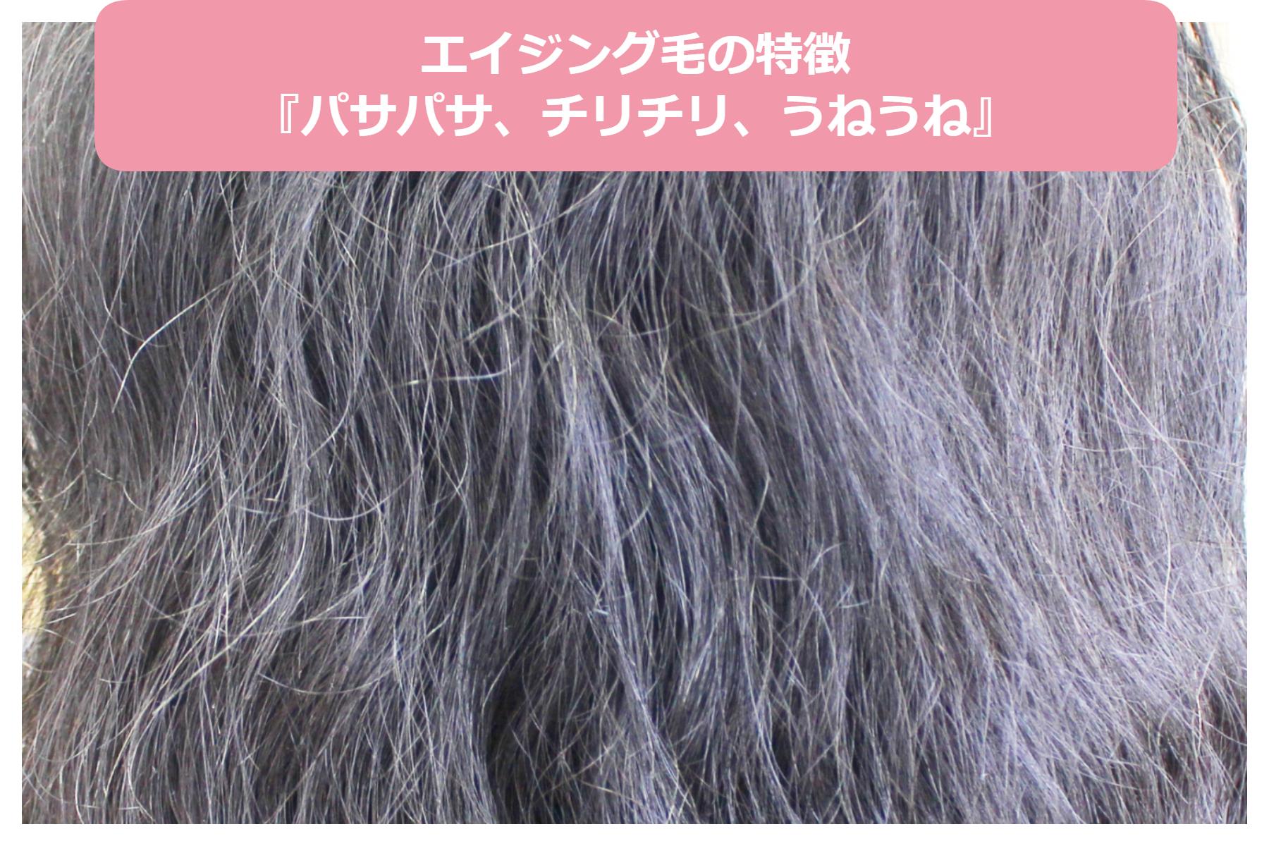 パサパサ くせ毛 髪