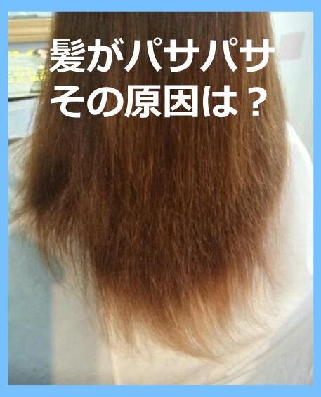 髪がパサパサの原因